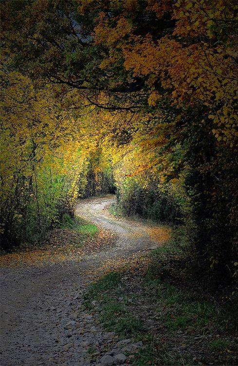 Sentier lumineux : Vos plus belles photos aux couleurs de l'automne - Linternaute