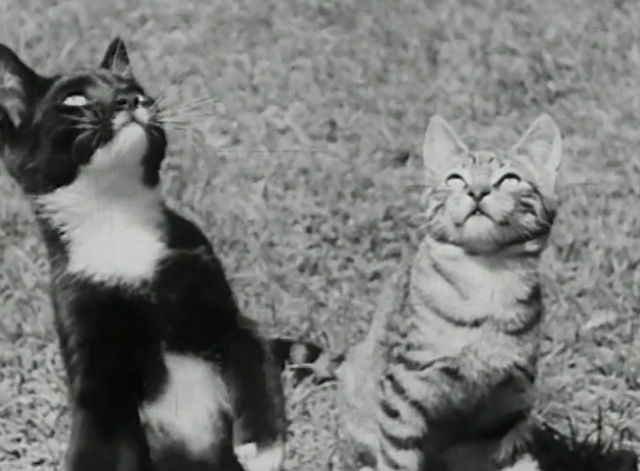 A couple of kittens play with children at a summer camp in the short film A Child Went Forth (1942).