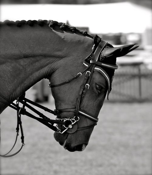 horses, braided mane
