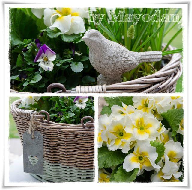 Follow The Bunny Alte Korbe Pflanzen Garten
