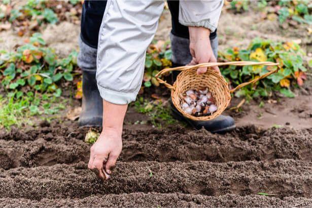 Faire son jardin d'automne : que planter en octobre, semis ...