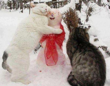 Cats enjoying winter