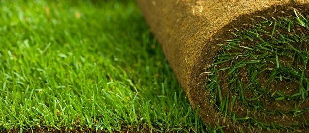 Forduljon hozzánk, ha gyepszőnyegre vágyik!  http://www.budaorsikerteszet.hu/products/gyepszonyeg-209.html