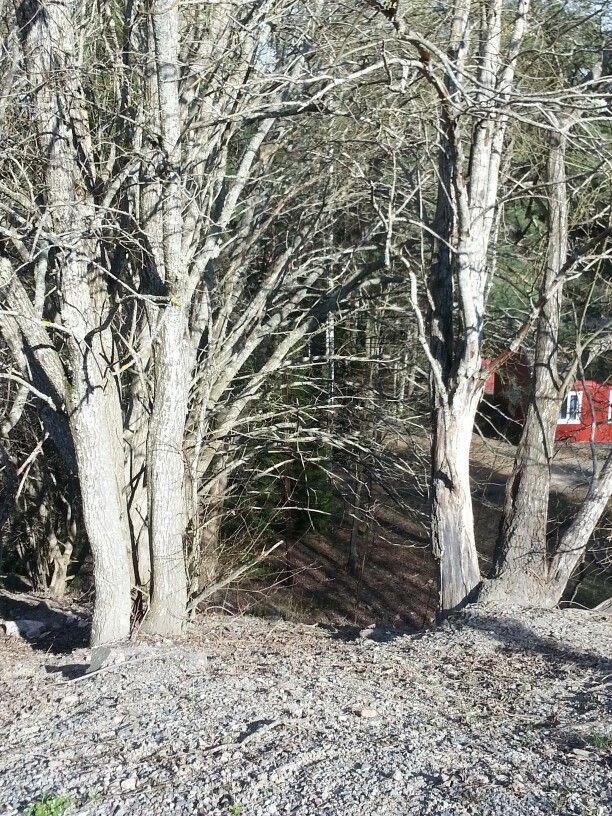 Intressanta träd
