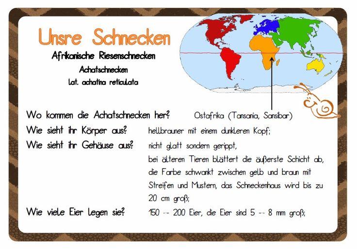 Die besten 17 Bilder zu Schnecke auf Pinterest : Deutsch ...