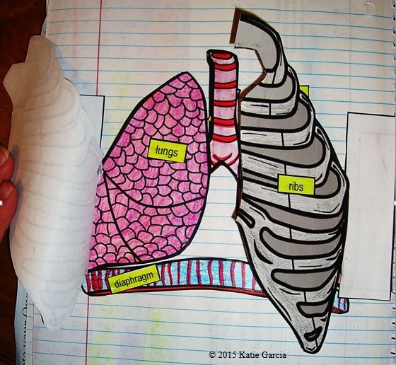 respiratory system foldables mrs gs science products