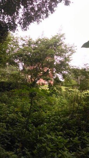 Hacienda en el rumbo de tahmek Yucatan