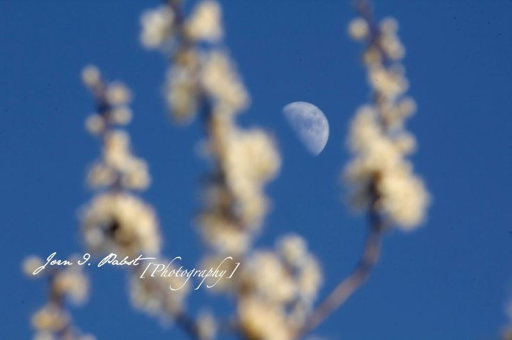 Moon in the spring 2014
