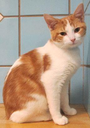 Animated Cat Gifs Orange tabby cats, cats