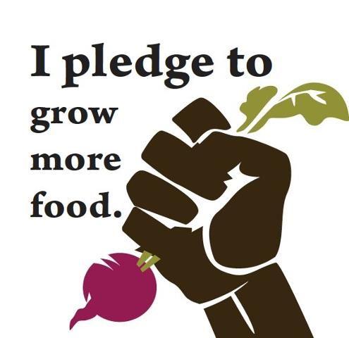 Urban Farming - I pledge to grow more food and I challenge you to do the same :-)