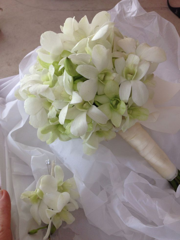 Elopement posy of white Sungapore orchids Www.bloomsofnoosa.com.au