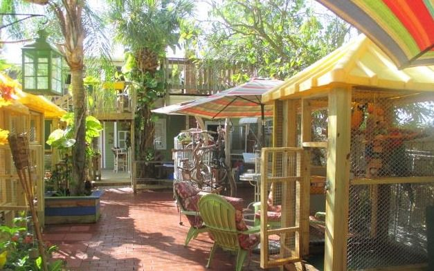 The backyard bird cages at M.A.R.S parrot rescue #parrots #rescue #aviary