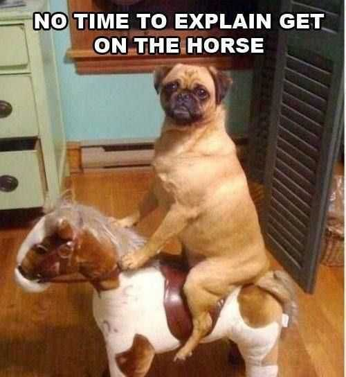 hahaha: Rocks Hors, Funny Dogs, Funny Pugs, Funny Pictures, Funny Photo, No Time, Funny Animal, Dogs Funny, Pugs Life