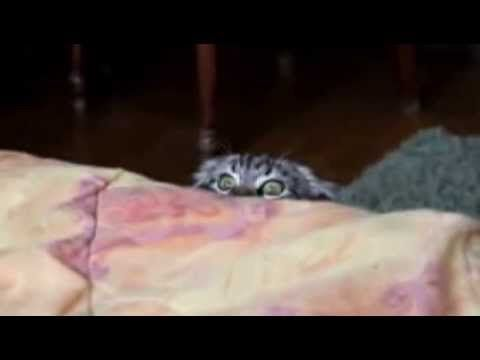 Sneaky Cat Spy -funny cat-funny cats videos -  #animals #animal #pet #cat #cats #cute #pets #animales #tagsforlikes #catlover #funnycats  Learn how to speak cat! Click HERE for the cat bible! Sneaky Cat Spy Funny Cat Site brings your the best. Top funny cats videos Favorite.   Funny Cat Pictures on the internet. New Cat Pictures &... - #Cats