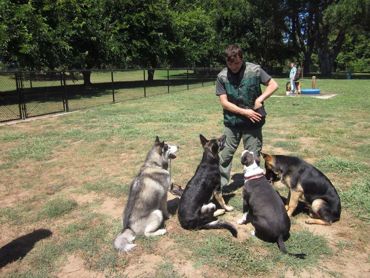 how to become a k9 trainer