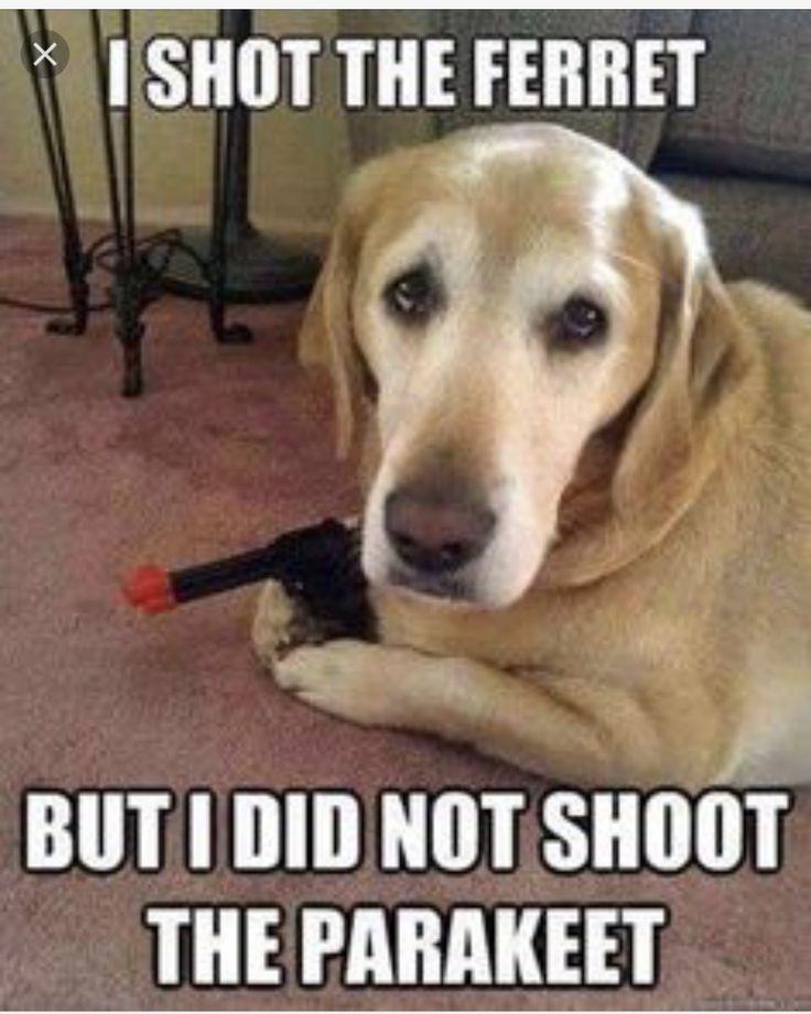 I shot the sheriff but I didn't not shoot the deputy