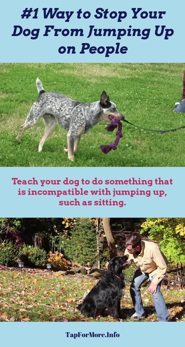 Stop Dog Jumping And How To Potty Train A Puppy Go Outside Check Pin For Various Dog Training Tips For Training Your Dog Dog Training Dog Training Aggression