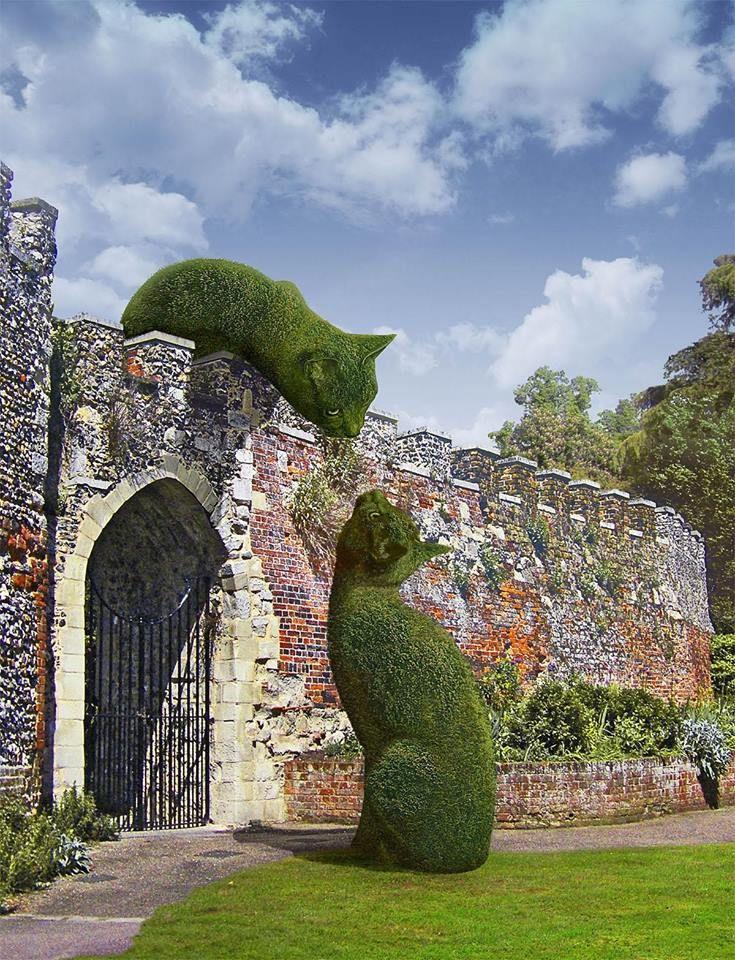Wow! Kitty cat topiaries. Hertfordshire, UK; photo by Richard Saunders
