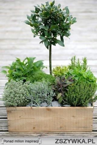 petit jardin pour balcon