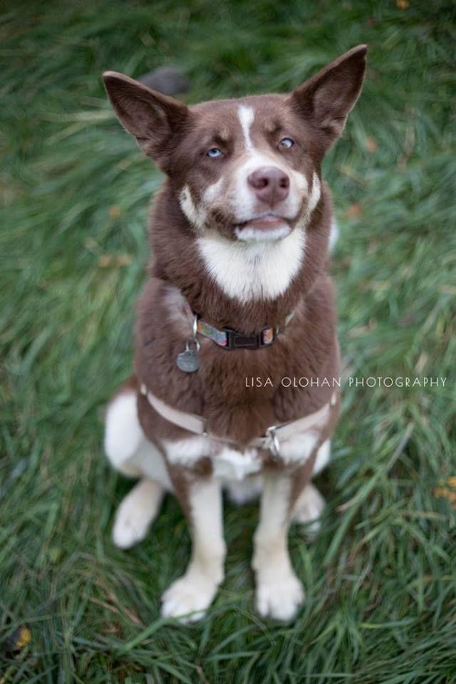 hart - Humane Animal Rescue Team