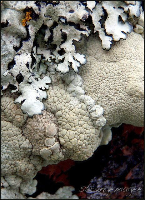 lichens - I'm not sure why, but this picture really appeals to me