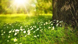 EDUCA TU VIDA: TERAPIA CON PLANTAS
