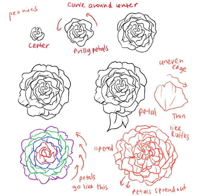 Best 25 how to draw roses ideas on pinterest roses for Easy flowers to draw for beginners step by step