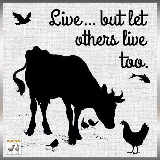 Cruelty-Free •~• Live... but let others live too.