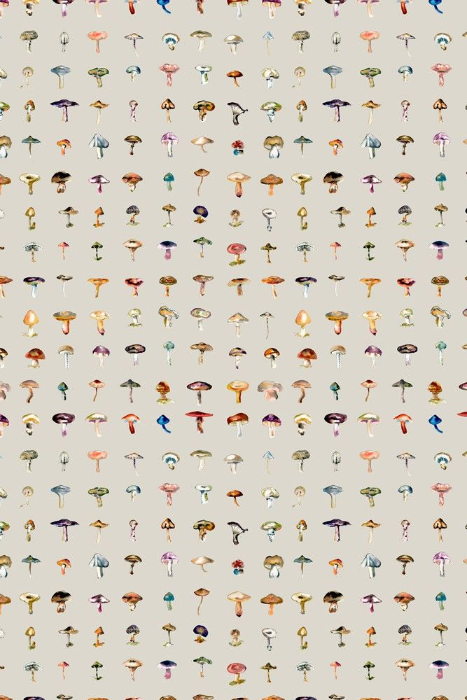 17 Patterns Forager Wallpaper 4 Colours Available Wallpaper M Wallpaper Wallpaper Decor
