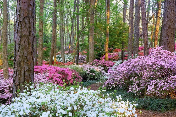 39 Best Beautiful Gardens Images On Pinterest Landscaping Gardening And Beautiful Gardens