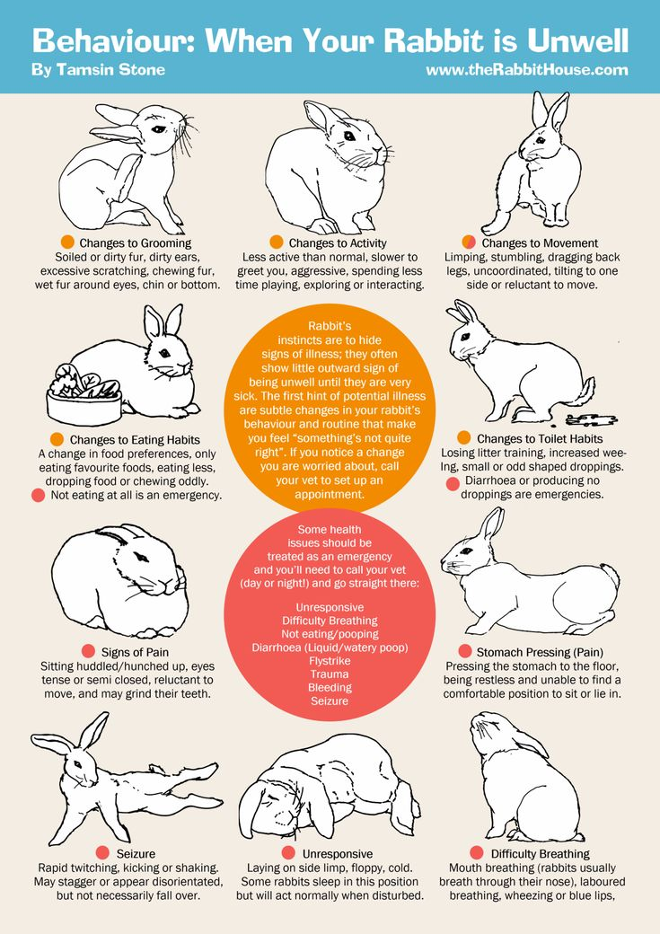 Rabbits hide signs of illness; these subtle behaviour changes may signal your rabbit is unwell.