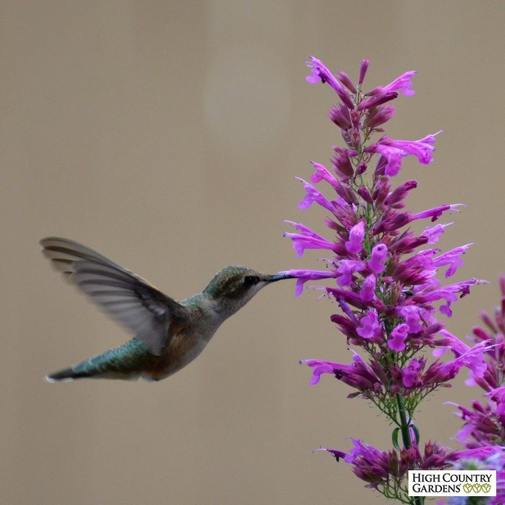 164 Best Images About Bees Butterflies And Hummingbirds Plants Luv On Pinterest Sun Bee House