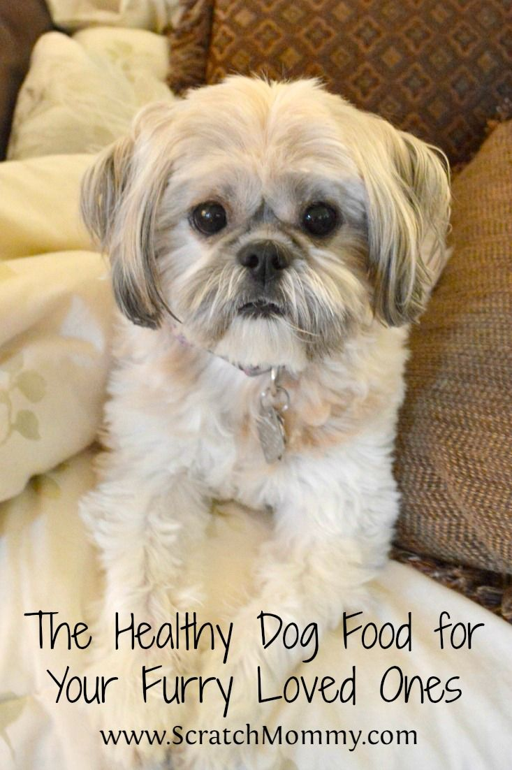 The Healthy (holistic!) Dog Food for Your Furry Loved Ones