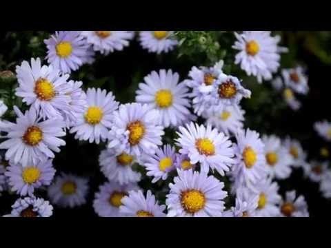 2016-10-14 Walk into the Feldmark in Schenefeld and back by Stefanie Neumann on YouTube (13:36min)