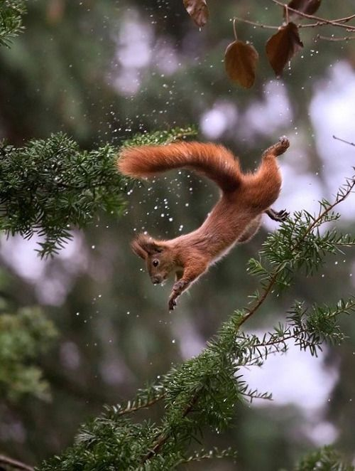 Squirrel by © Sergey Polyushko