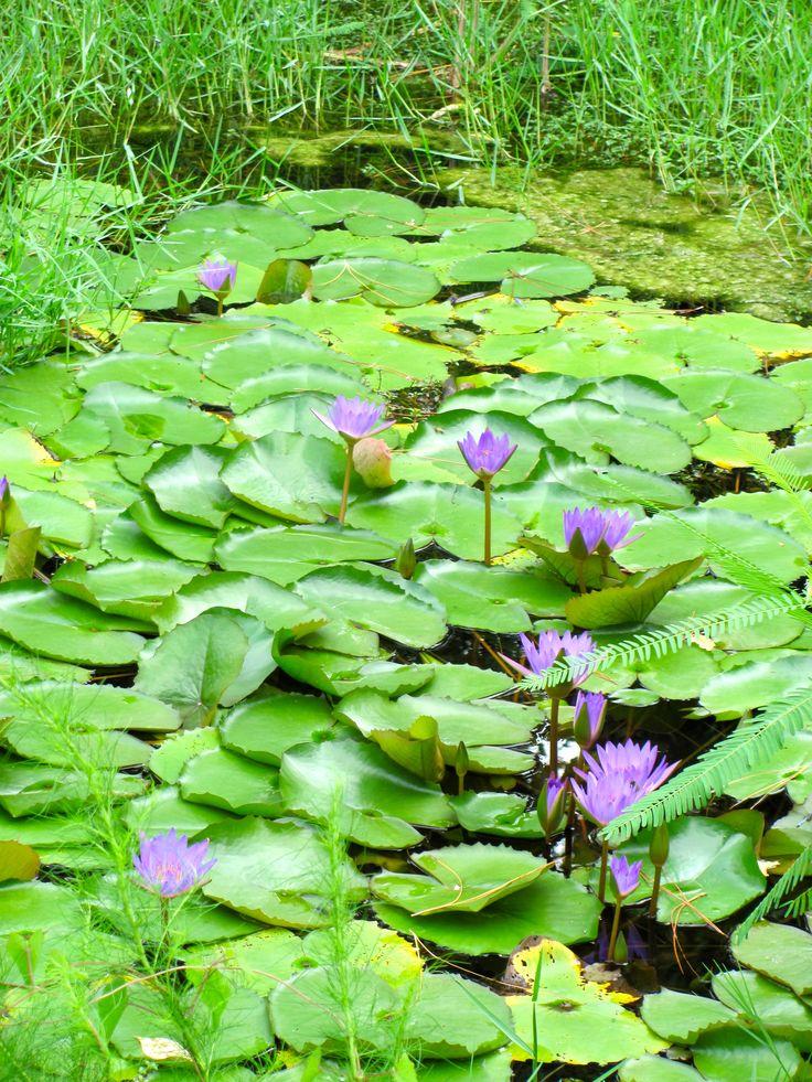 Florida Botanical Gardens In Largo Home Ideas Pinterest Gardens Florida And Botanical Gardens