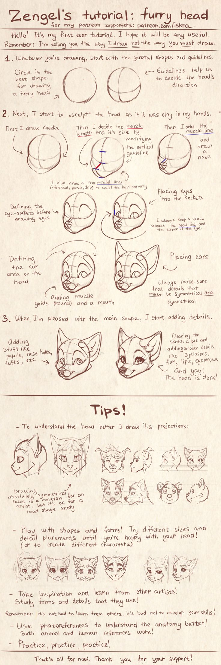 Zengel's tutorial - furry heads. by Zengel.deviantart.com on @DeviantArt