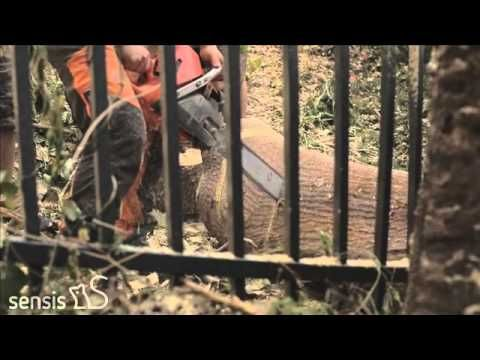 Tree Maintenance | Shellharbour | All Round Tree & Garden Care | All Round Tree & Garden Care