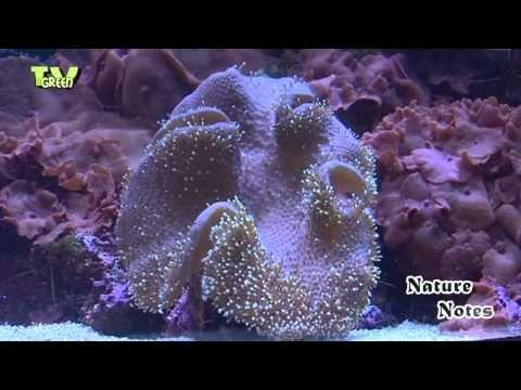 De lagune van Burgers' Ocean is een klein ecosysteem waarin verschillende soorten met elkaar samenleven.     Looking for broadcast footage? Don't shoot! Contact http://www.stockshot.nl/ ©  playlist aquatic: http://www.youtube.com/view_play_list?p=7683951DF98009