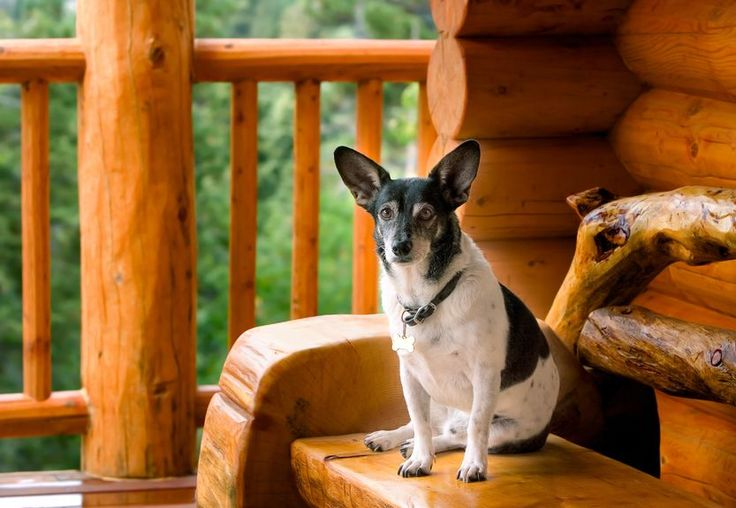 Nice blogpost about Great Pet Friendly Cabins and Chalets in Gatlinburg TN by Shane Eubanks at http://www.gatlinburgtnguide.com/lodging/great-pet-friendly-cabins-and-chalets-in-gatlinburg-tn/