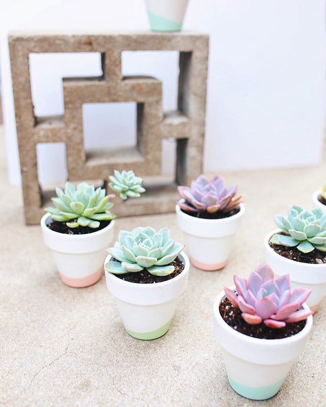 Succulent Baby Shower Favors By Dalla Vita