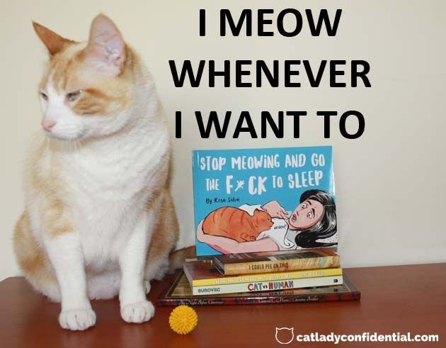 Stop Meowing And Go The F Ck To Sleep Is A Hilarious Bedtime Book For All The Desperate Cat Parents Out There Cats Cat Merchandise Bedtime