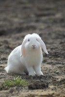 BunnyBunch | Informatie - Konijnvriendelijke tuin | Webwinkel, informatie & forums