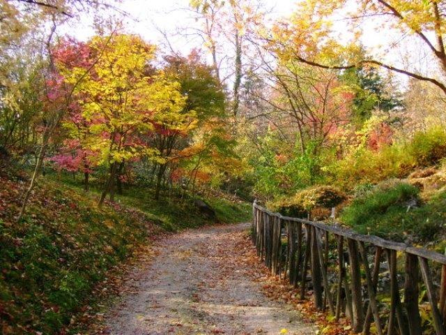 Vácrátót, az ország legnagyobb botanikus kertje