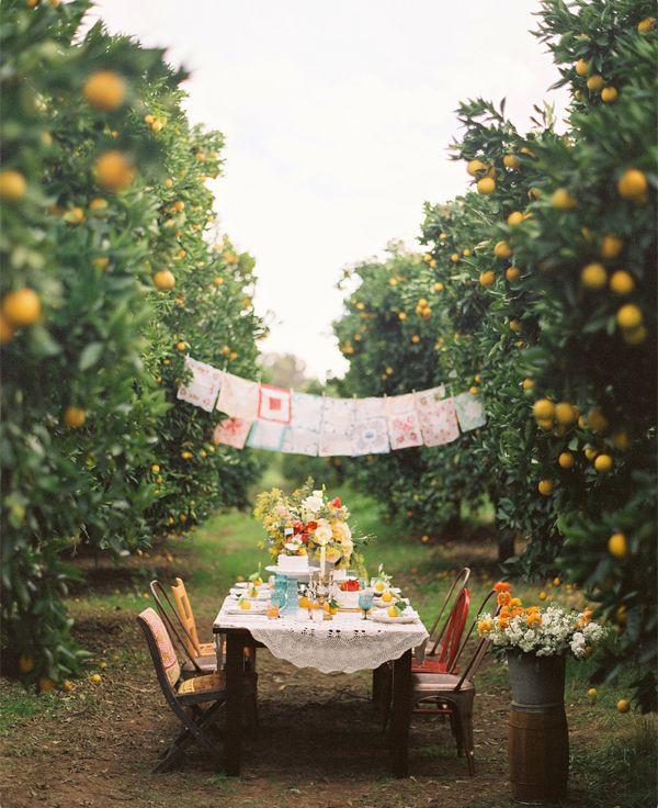 orange grove lunch