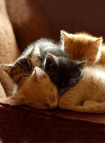 A cuddle of kittehs