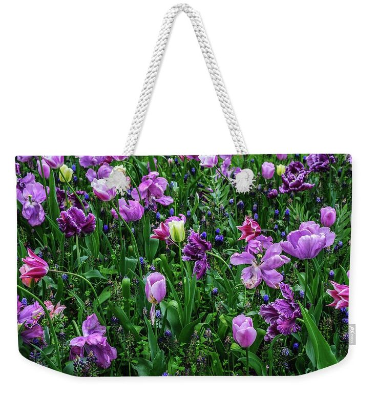 Jenny Rainbow Fine Art Photography Weekender Tote Bag featuring the photograph Carpet Of Purple Tulips In Keukenhof by Jenny Rainbow