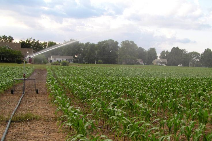 Safe Uses of Agricultural Water: Risk factors associated with the water we use to grow, harvest, and handle fresh produce and how to reduce the risk of contamination.