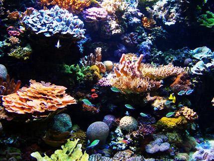 Coral forest    (via myclimatechange.net)