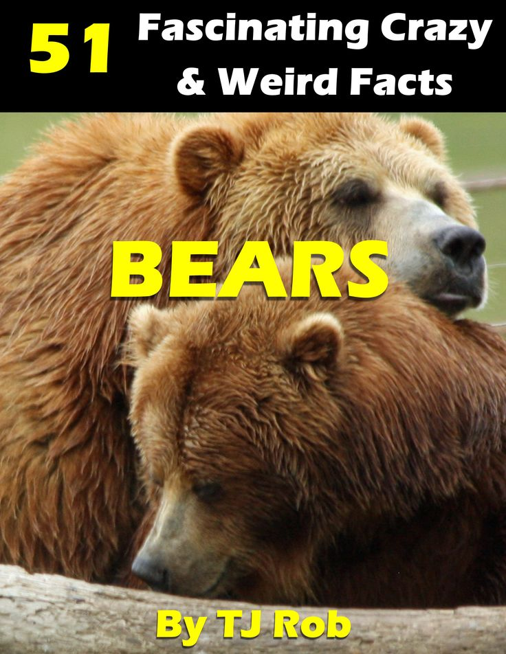 Bears are huge and amazing - here's a whole lot of facts about Bears that you may not know about!  www.TJRob.com